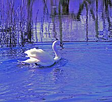 REFLECTIONS IN BLUE by KENDALL EUTEMEY