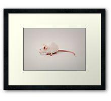 Funny Mouse Cat Animal Morph Framed Print