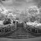 Shakespeare's Garden IR by Jessica Jenney
