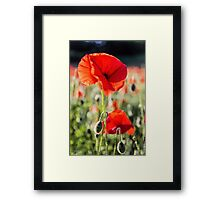 Another Poppy Framed Print