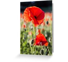 Another Poppy Greeting Card