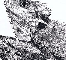 Iguana by Vicky Pratt