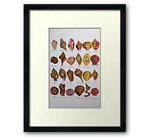 Watercolor Seashell Alphabet Framed Print