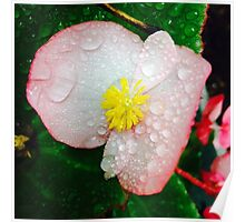Flower Covered In Dew Poster