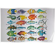 Fish Alphabet Watercolor Poster