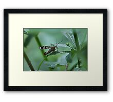Bug hunt 3 Framed Print