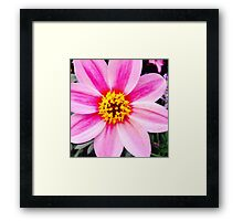 Yellow And Pink Flower Framed Print