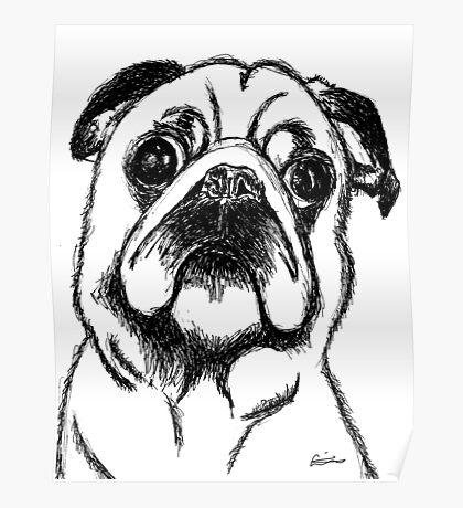 Curious Pug Poster