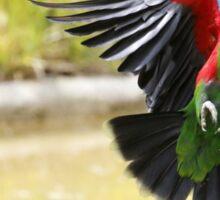 Le vol du perroquet Sticker