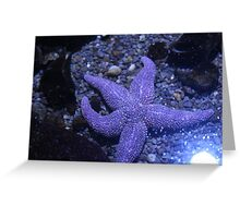 5 Point Starfish Greeting Card