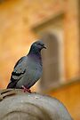 Posing Pigeon by Tiffany Dryburgh