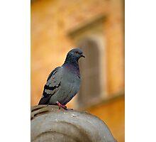 Posing Pigeon Photographic Print