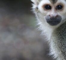 Squirrel monkey, sapajou jaune Sticker