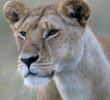 Lionness Sticker