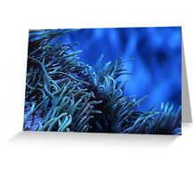 Anemone of the Sea Greeting Card