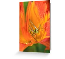 My Colorful Pad Greeting Card