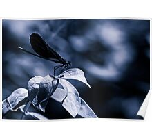 Damsell Fly on a Leaf Poster
