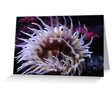 Yet another Sea Anemone Greeting Card