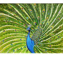 Glorious Peacock Photographic Print