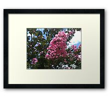 The Blossoms of Summer Framed Print