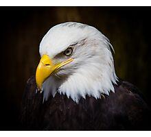 Bald Eagle Photographic Print