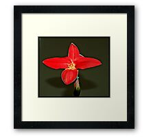 Orchid On Display Framed Print