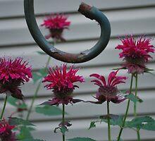 Bee Balm by Tracey Hampton
