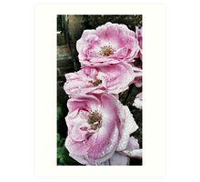 Shabby Rose Pink  Art Print