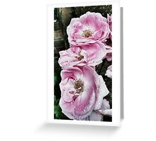 Shabby Rose Pink  Greeting Card