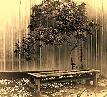 In a Singular Garden by Marilyn Cornwell