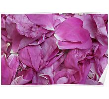 bunch petals red rose Poster