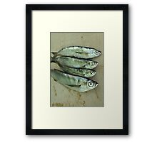 freshly caught fish sabrefish Framed Print