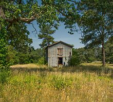 Barn In Summer Sunshine: Color by Susan Nixon