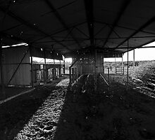 old Shearing shed by loza1976