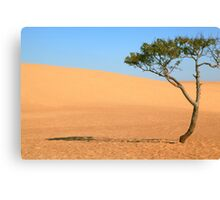 Lone Tree and Sand Dunes Canvas Print