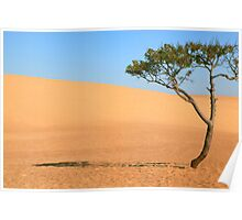 Lone Tree and Sand Dunes Poster