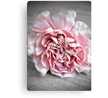 The Carnation Canvas Print