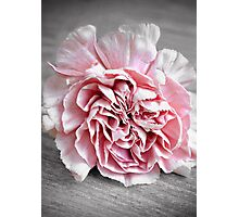 The Carnation Photographic Print