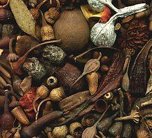 Aussie Nuts n Pods by MaryJaneBayliss