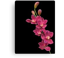 PINK ORCHIDS FOR JEAN Canvas Print