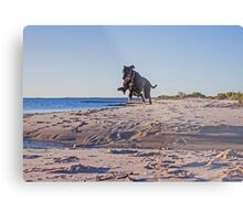 leaping Lucy Metal Print