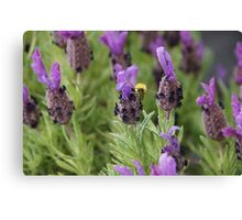 Lavender and Bee Canvas Print