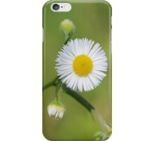 Daisy flower on green grass iPhone Case/Skin
