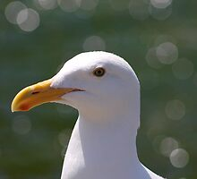 Seagull an the Orbs by David Denny