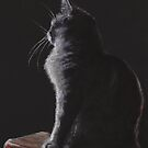 Cat in the Moonlight by Pam Humbargar