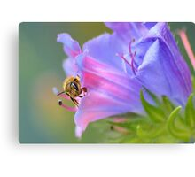 Bee in the Garden Canvas Print