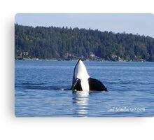 Curious Killer Whale Canvas Print