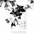 Petunias by Ingz