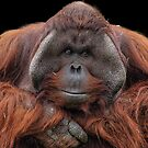 Orangutan v1 by JMChown