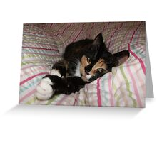 All you need is Tortitude Greeting Card